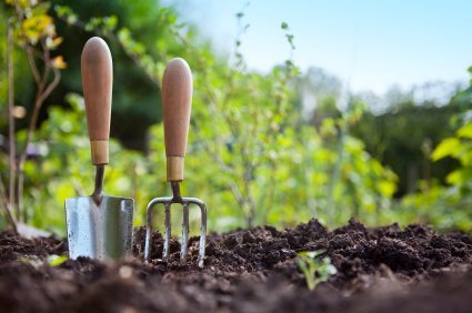 Planting and Mulching
